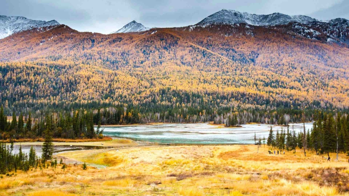 Xinjiang travel- autumn forest in Altay