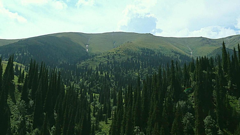 Xinjiang travel- Forest and grasslands along the Du Ku Highway