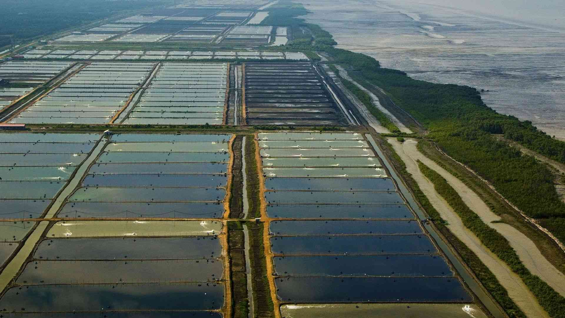 Fields near the western coast of the Malay Peninsula