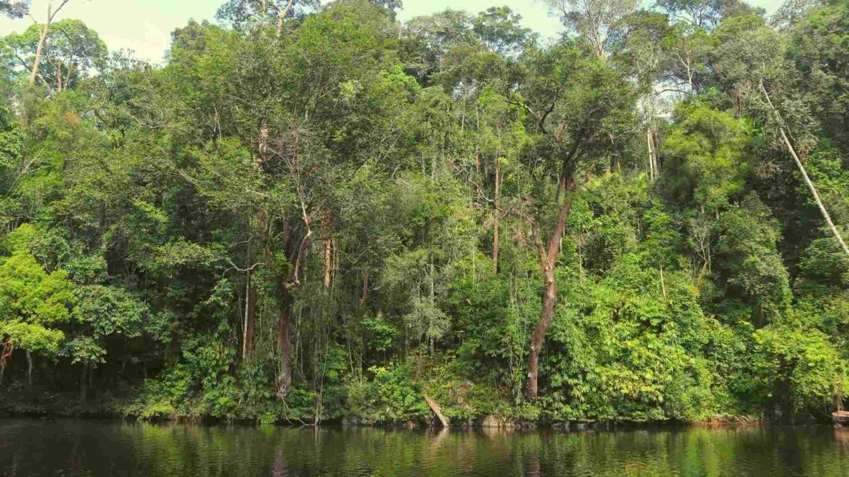 Equatorial rainforest in Taman Negara