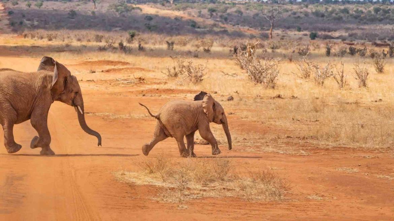 Savanna in Africa