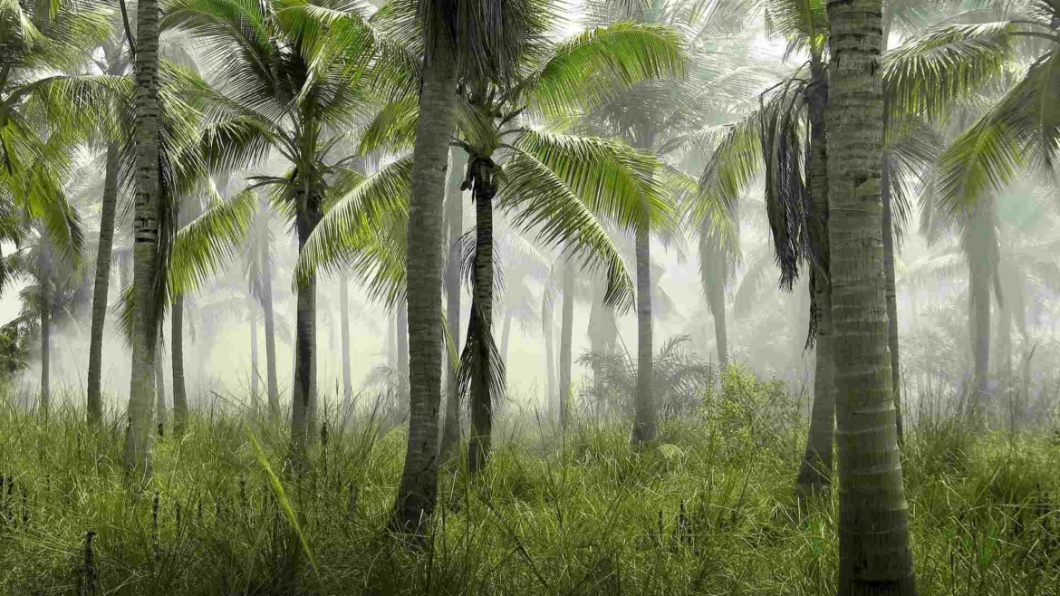 Tropical coconut forest